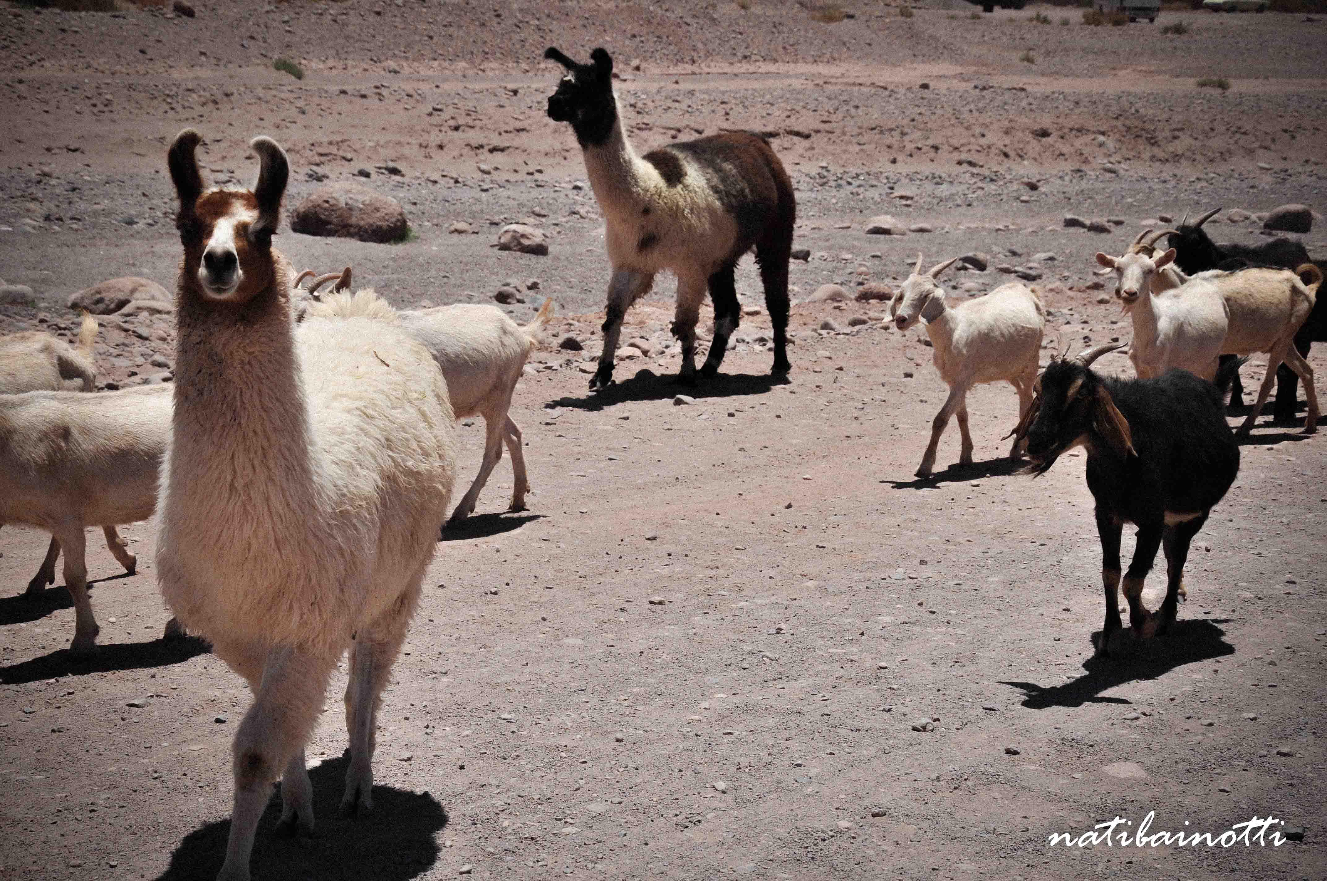 desierto-atacama-chile (21)