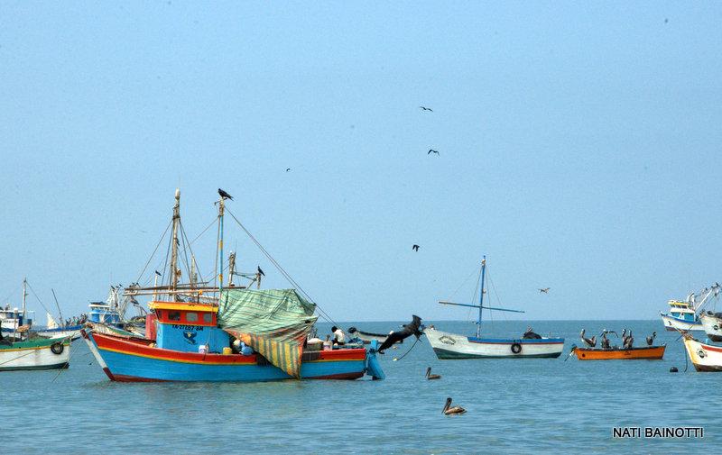 barcos pesqueros en los organos