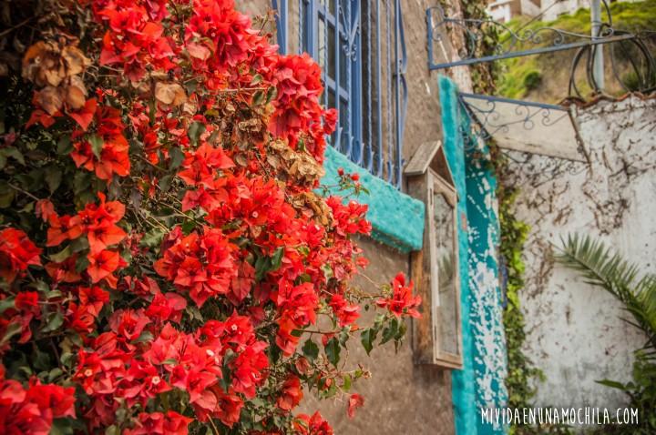 guapulo quito flores