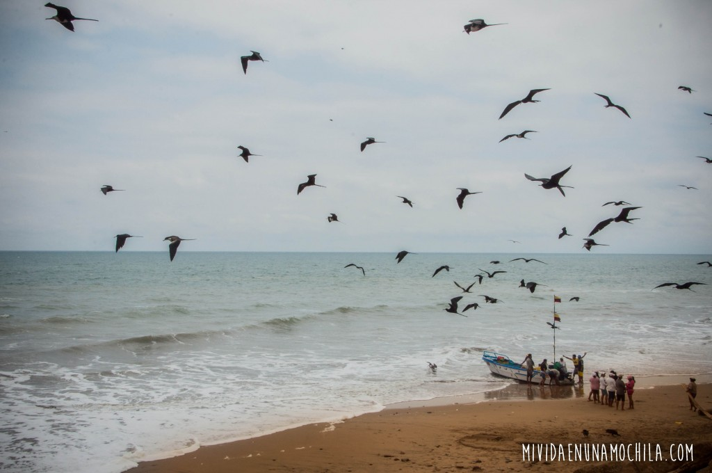 gaviotas lancha pesquera ecuador