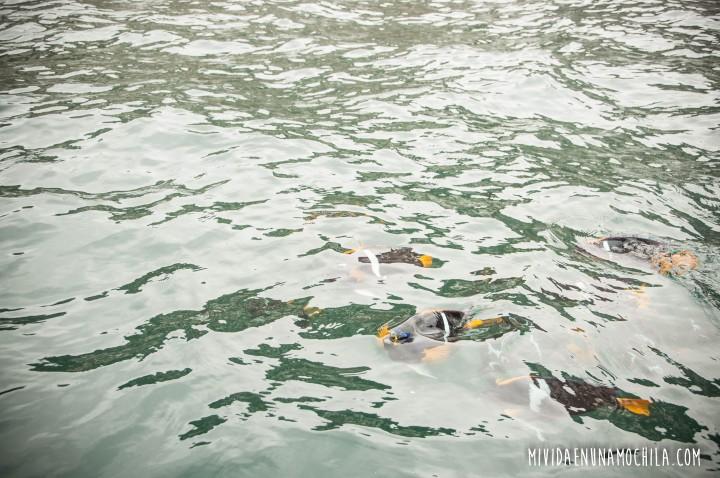 peces isla de la plata