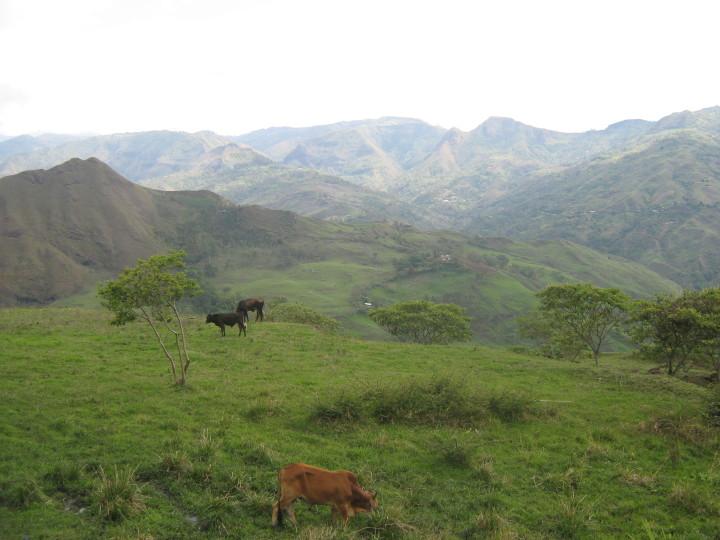 vacas campos colombia
